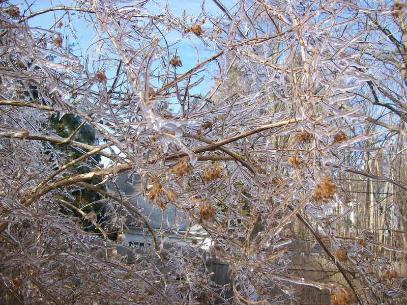 Ice trees2